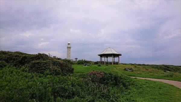 角島 ハマユウの自生地